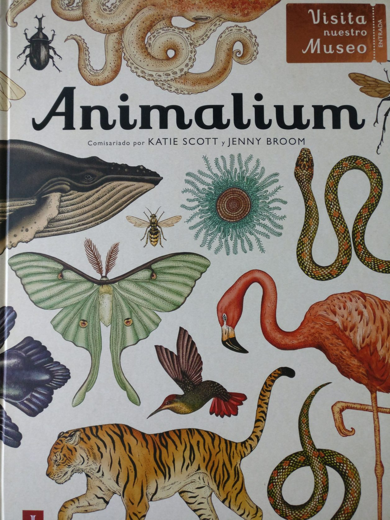 Madres Desterradas Libro Infantil Ilustracion Animalium Animales
