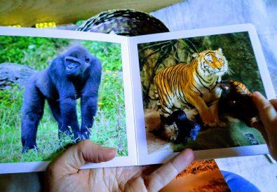 Madres Desterradas Editorial Nowordbooks Libros de Animales